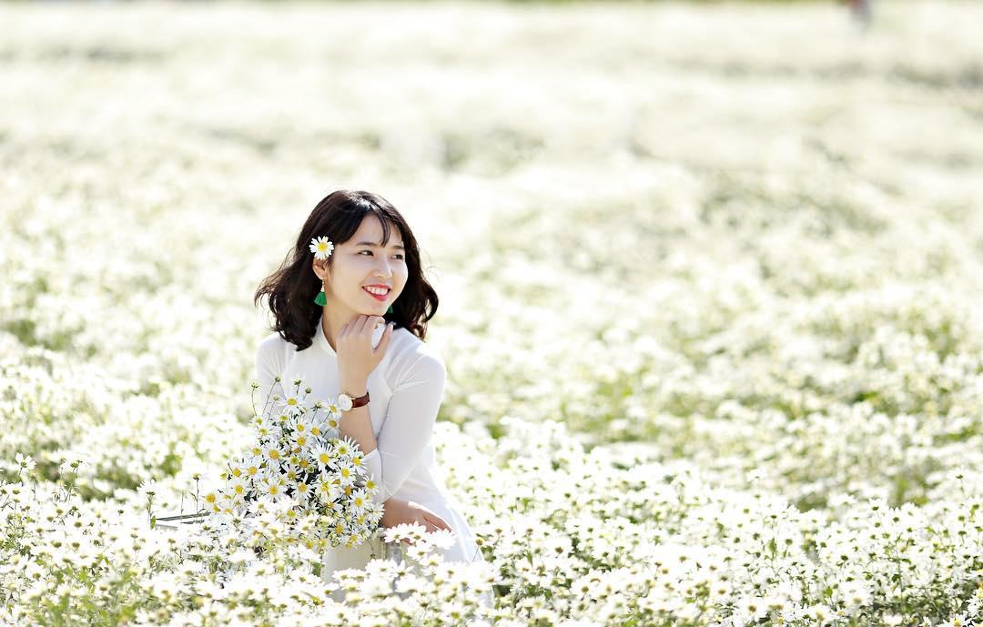 Vườn cúc họa mi là địa điểm chụp ảnh nên đi ở Hà Nội