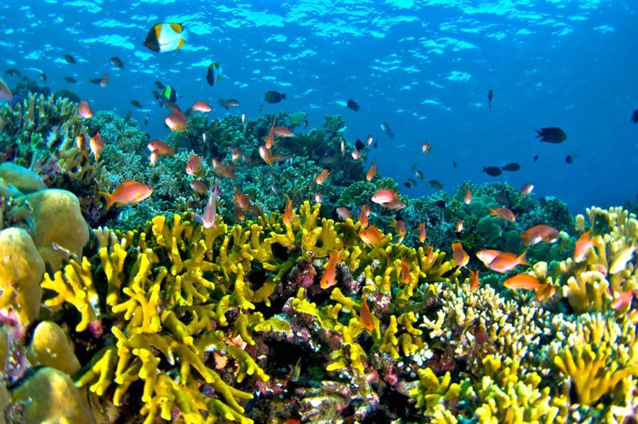 (Những loài cá trong lòng đại dương)