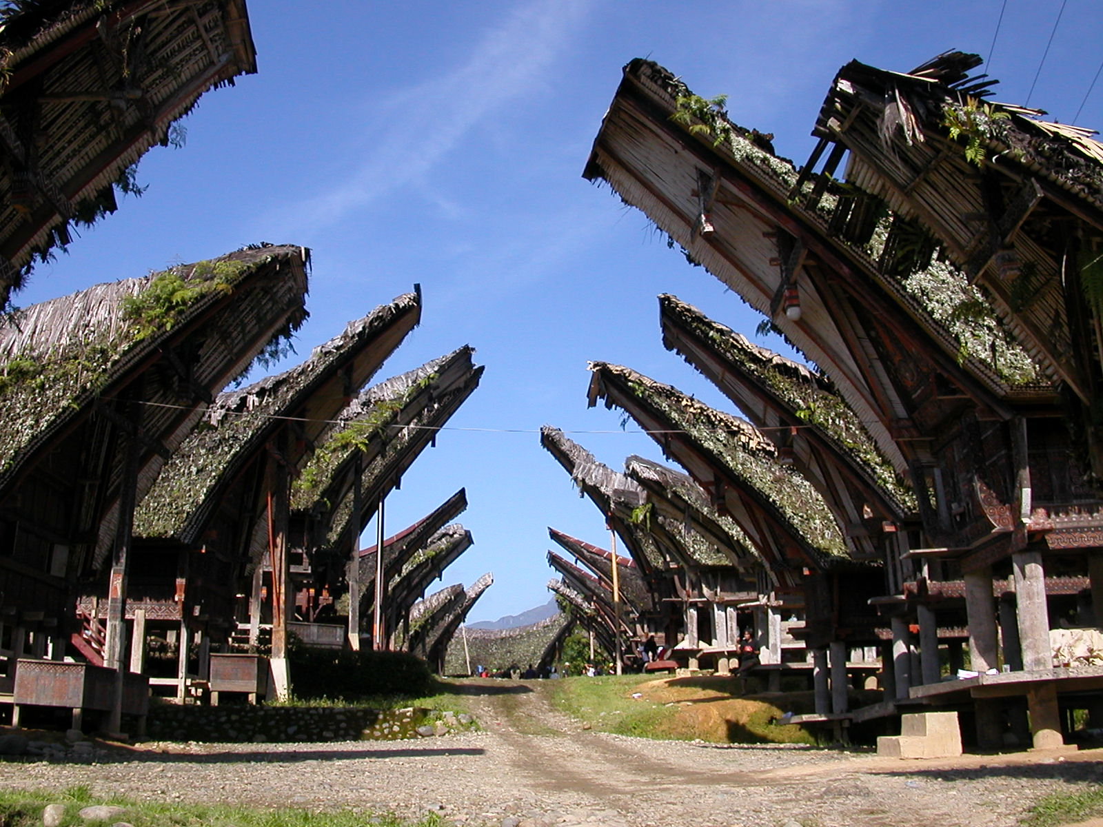 Những ngôi nhà Tongkonan