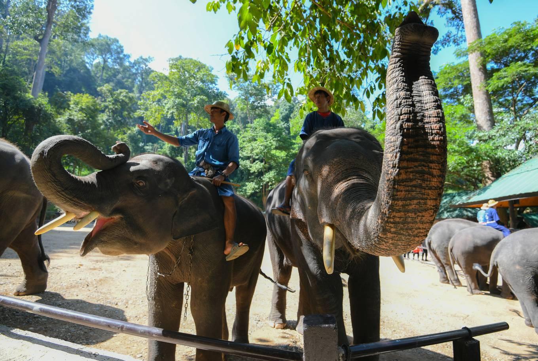 Trải nghiệm cưỡi voi