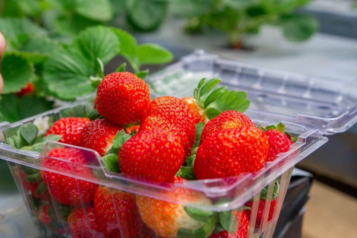 Mang hoa quả đi máy bay