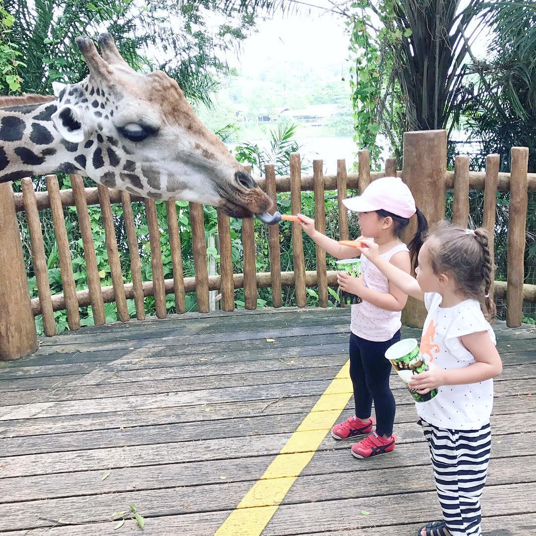 Đây sẽ là một trải nghiệm tuyệt vời cho các bé, giúp bé gần gũi với thiên nhiên hơn.