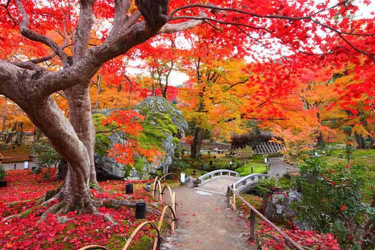Mùa lá đỏ lãng mạn