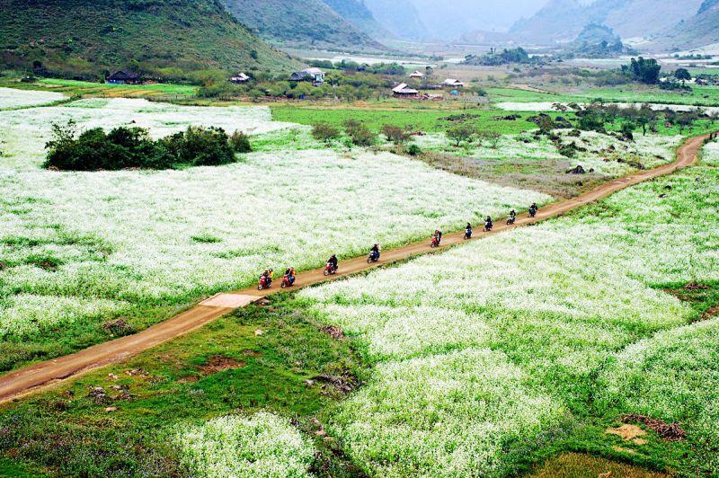 Kinh nghiệm du lịch Mộc Châu nên tới đây vào mùa hoa cải trắng
