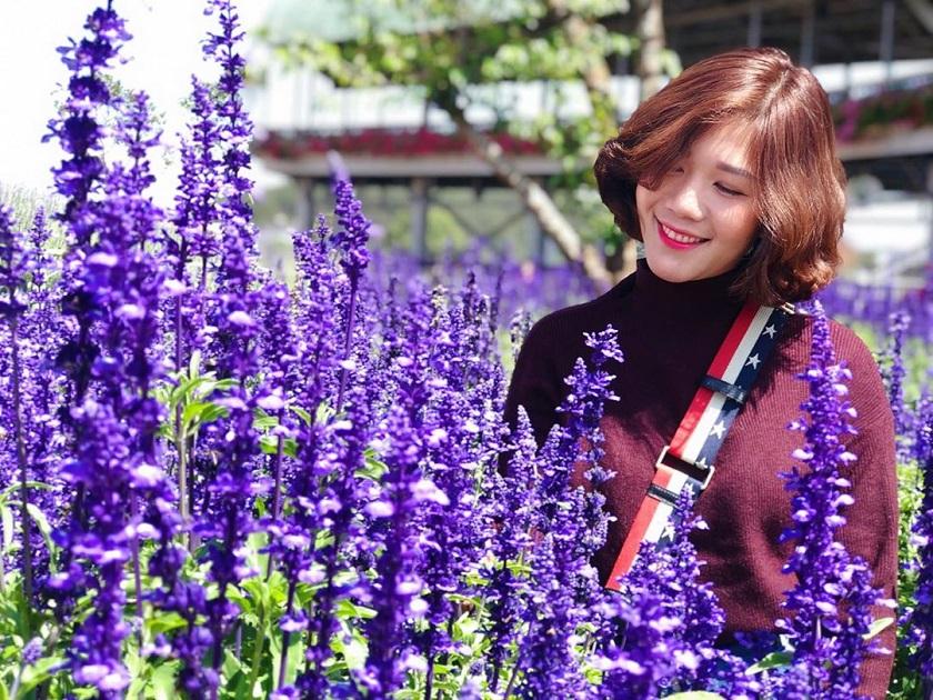 Vườn hoa Lavender tại khu du lịch Fresh Đà Lạt
