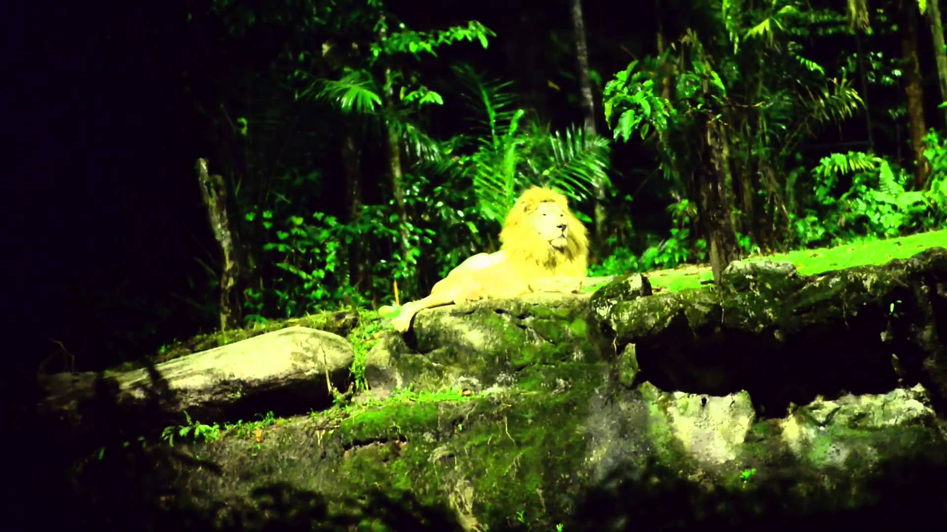 Tham quan vườn thú vào ban đêm