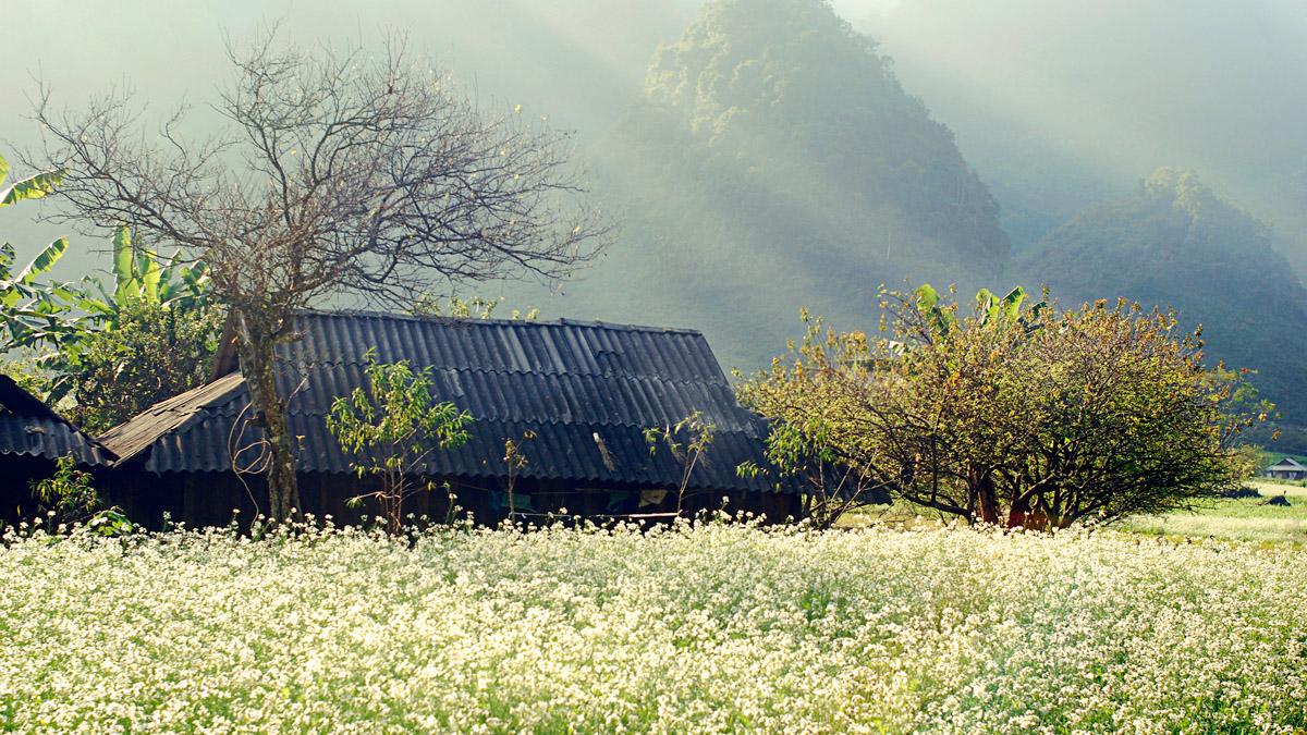 Hoa rừng Mộc Châu