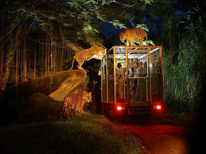 Trải nghiệm của du khách tại vườn thú đêm Night Safari
