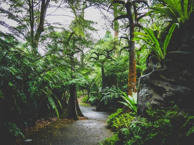 Không gian xanh của Singapore Botanic Garden