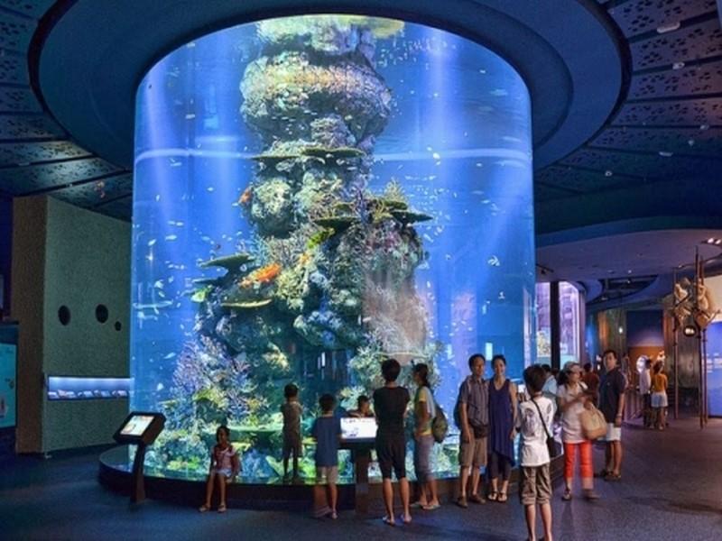 Thủy cung nhân tạo lớn nhất thế giới S.E.A Aquarium