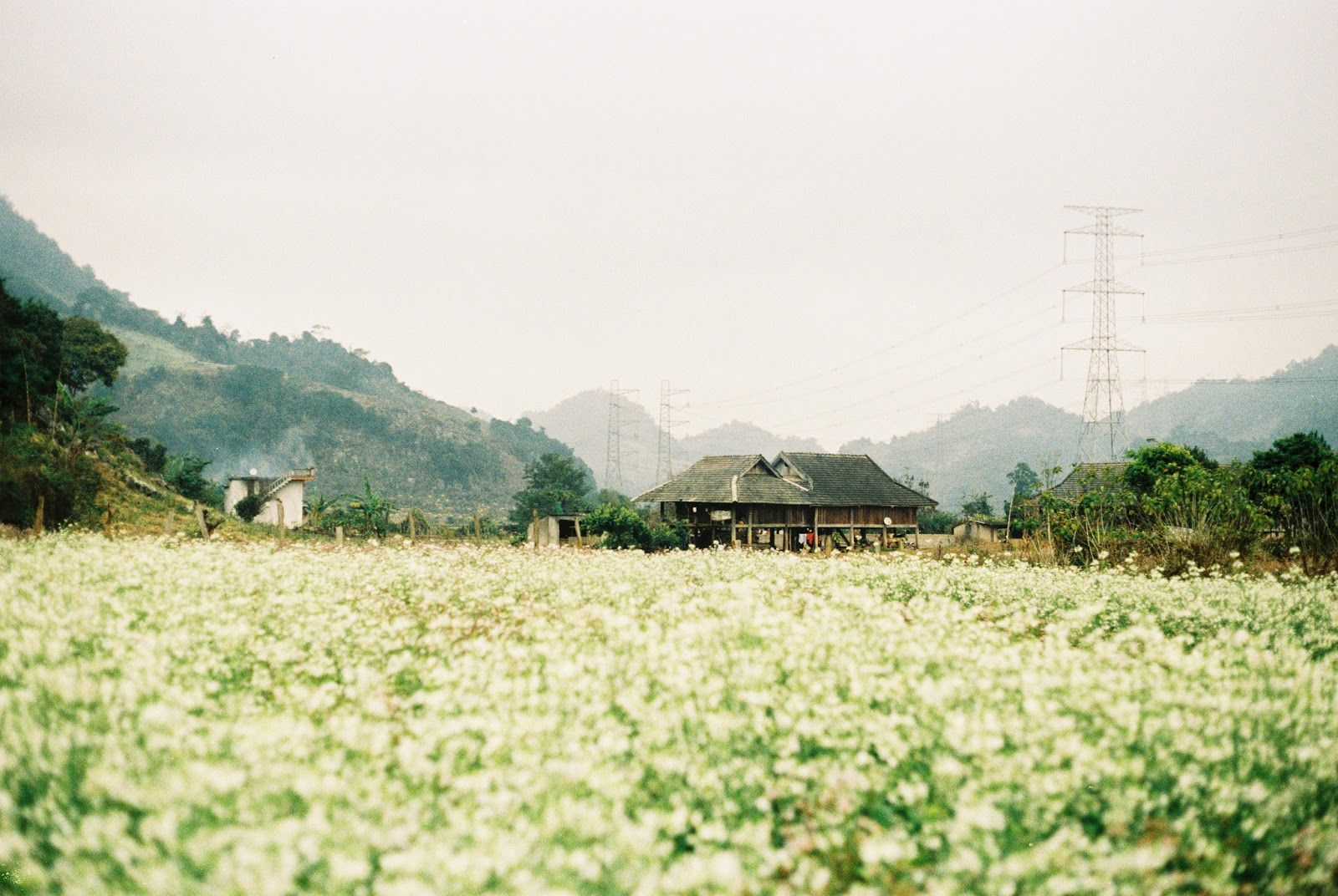 Thị trấn nông trường Mộc Châu