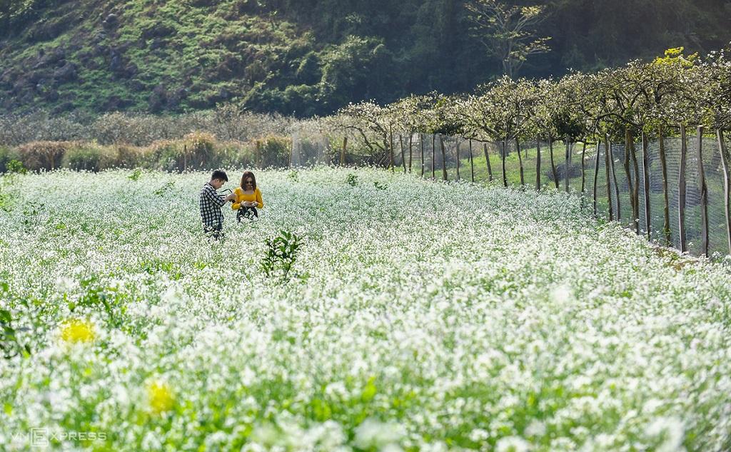 Mùa hoa cải tại thung lũng Nà Ka