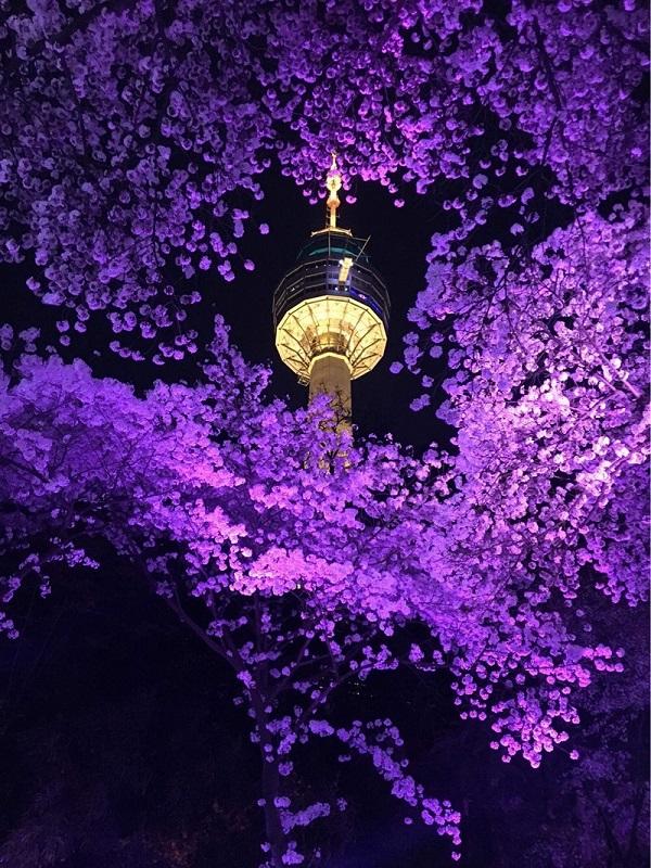 Tháp Nam San đẹp rực rỡ về đêm