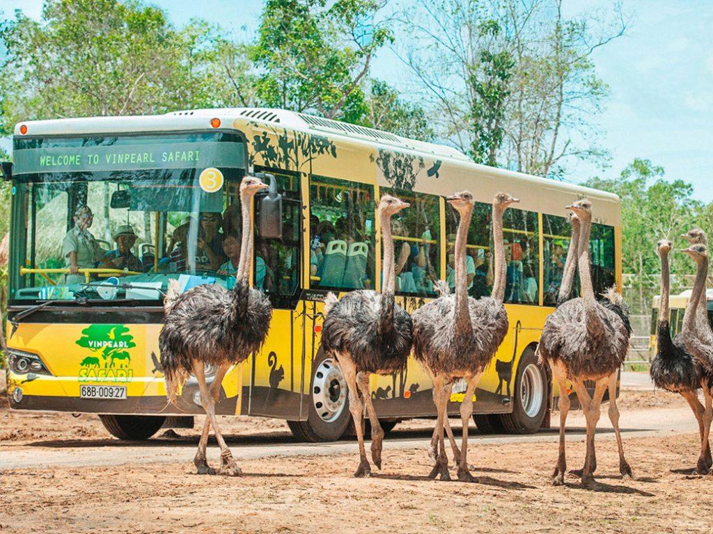 Vườn thú bán hoang dã Vinpearl Safari