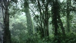 Rừng Quốc gia Cúc Phương