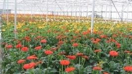 Trang trại hoa Lang Biang