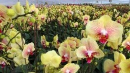 Vườn Hoa Nhiệt Đới Mộc Châu