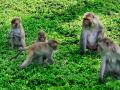 Hòn Lao (Đảo khỉ)