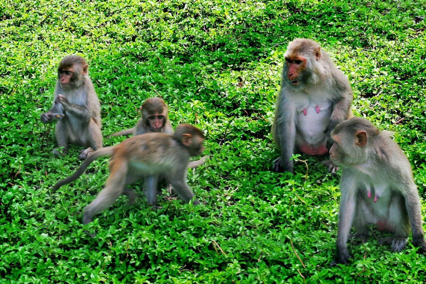 Những chú khỉ tinh nghịch tại đảo Khỉ