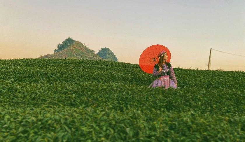 Chia sẻ kinh nghiệm du lịch nông trường chè Mộc Châu – BestPrice