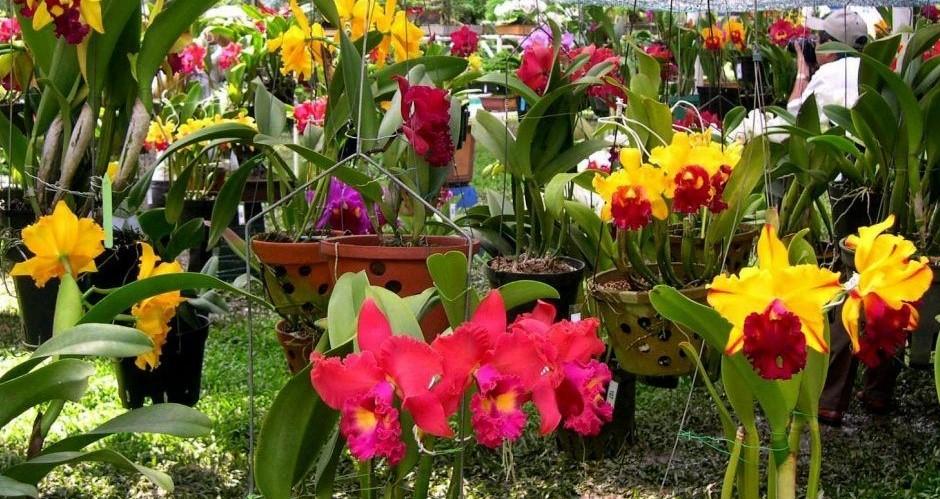 Vườn hoa nhiệt đới Mộc Châu tháng 6