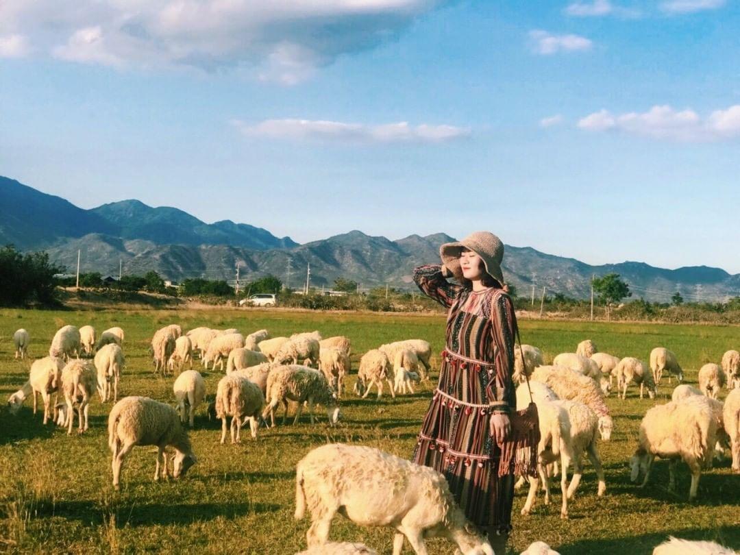 Du lịch cánh đồng cừu An Hòa Ninh Thuận tháng 7
