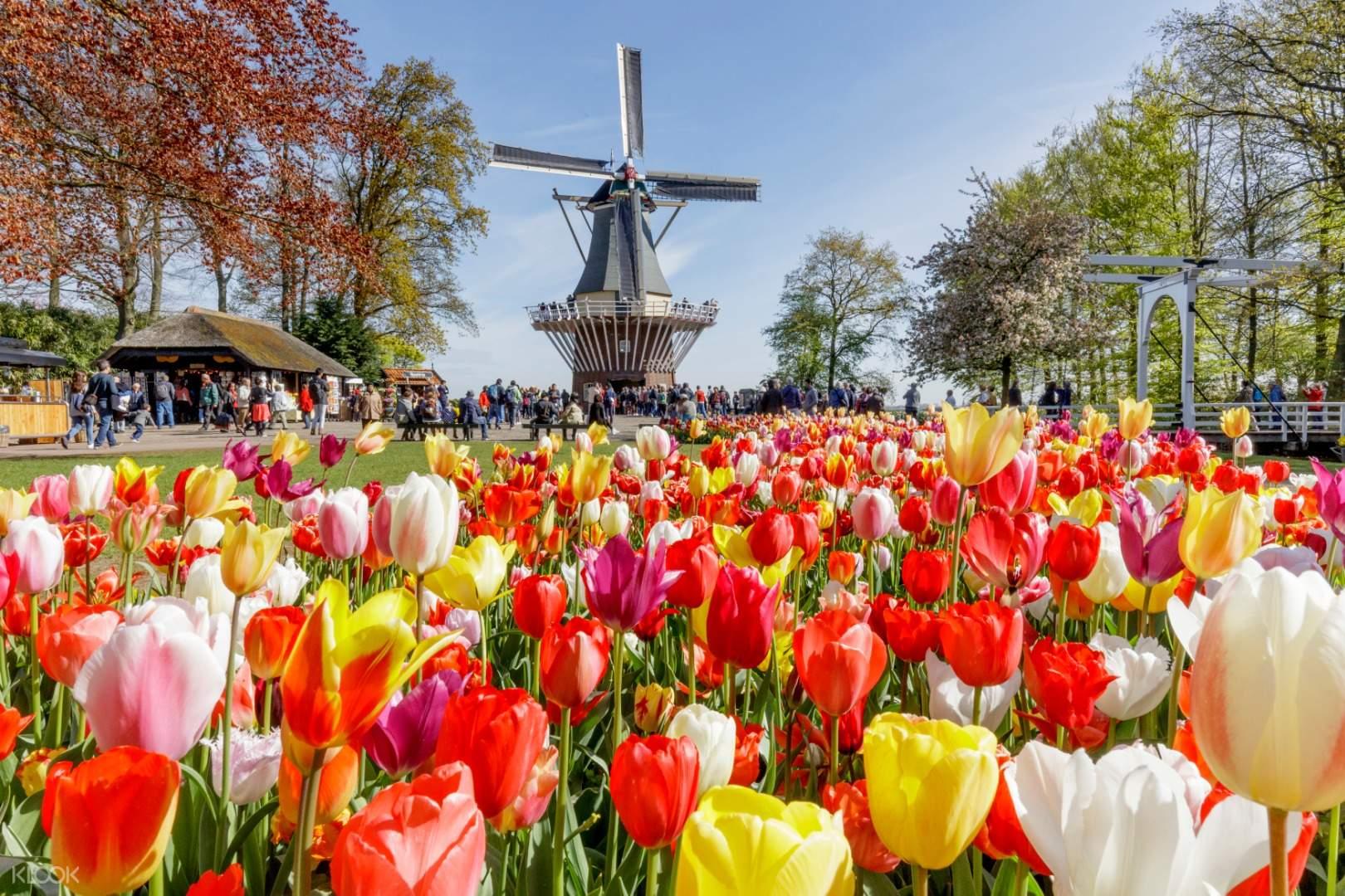 Đặt vé máy bay đi Hà Lan tháng 4