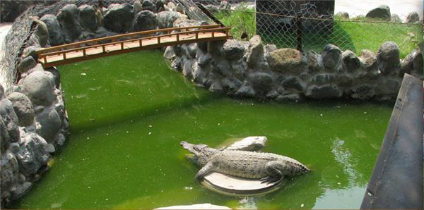 Hồ Nuôi Cá Sấu