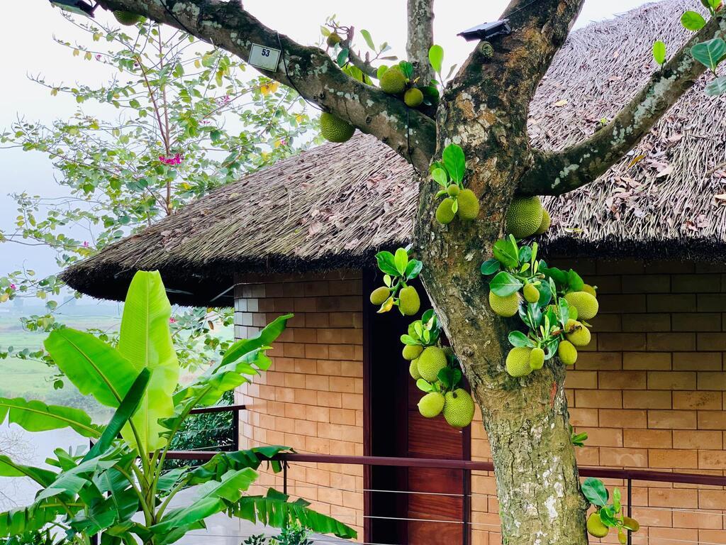 Jackfruit Villa (Villa cây mít)