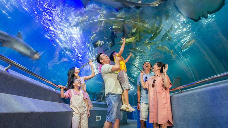 Vui chơi tại thủy cung VinWonders Nha Trang