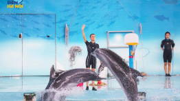 Vé Công viên biển Hà Nội + Biểu diễn cá heo độc đáo
