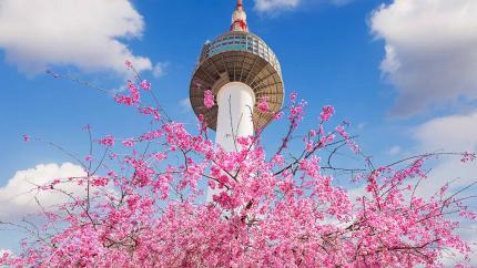 Ngắm hoa anh đào: Hồ Chí Minh - Busan - Seoul 5N5Đ