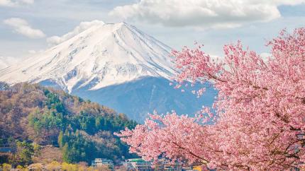 Khám phá Nhật Bản mùa hoa anh đào: Hà Nội - Osaka - Kobe - Kyoto - Phú Sỹ - Tokyo 6N5Đ