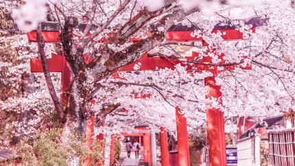 Mùa hoa anh đào: Hồ Chí Minh - Kyoto - Osaka - Kobe 4N3Đ