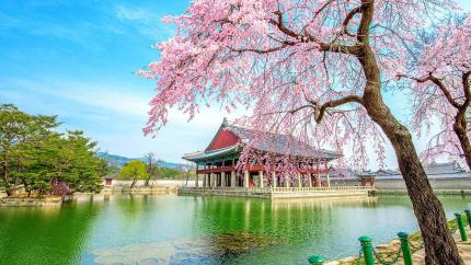 Ngắm hoa anh đào: Hà Nội - Seoul - Công viên Everland 5N4Đ (Bay Vietjet/Jeju Air)