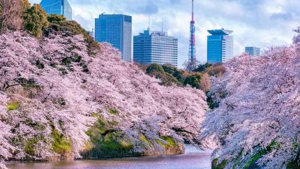 Nhật Bản mùa hoa anh đào 4N3Đ: Hà Nội - Tokyo - Hakone - Phú Sỹ - Tokyo (Hàng không Vietnam Airlines)