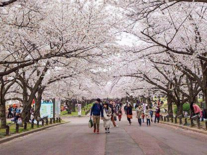 Hà Nội - Seoul -  Đảo Jeju  - Đảo Nami Công viên Everland - Yeouido Park 6N5Đ