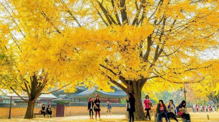 Hồ Chí Minh- Seoul - Đảo Nami - Công viên Everland 4N4Đ bay VJ