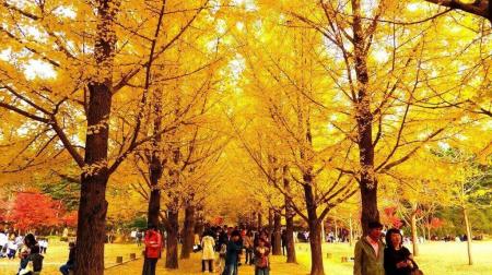 Hồ Chí Minh - Busan - Seoul 5N5Đ