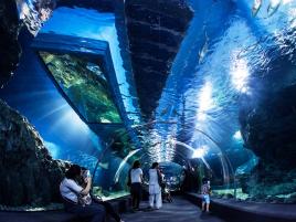Hà Nội - Bangkok - Pattaya 5N4Đ (Tặng Vé Thủy Cung, Safari World)