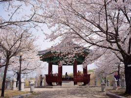 Mùa đông Hàn Quốc: Hồ Chí Minh - Seoul – Đảo Nami - Everland 4N4Đ