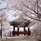 Hồ Chí Minh - Seoul - Đảo Nami - Everland 4N4Đ