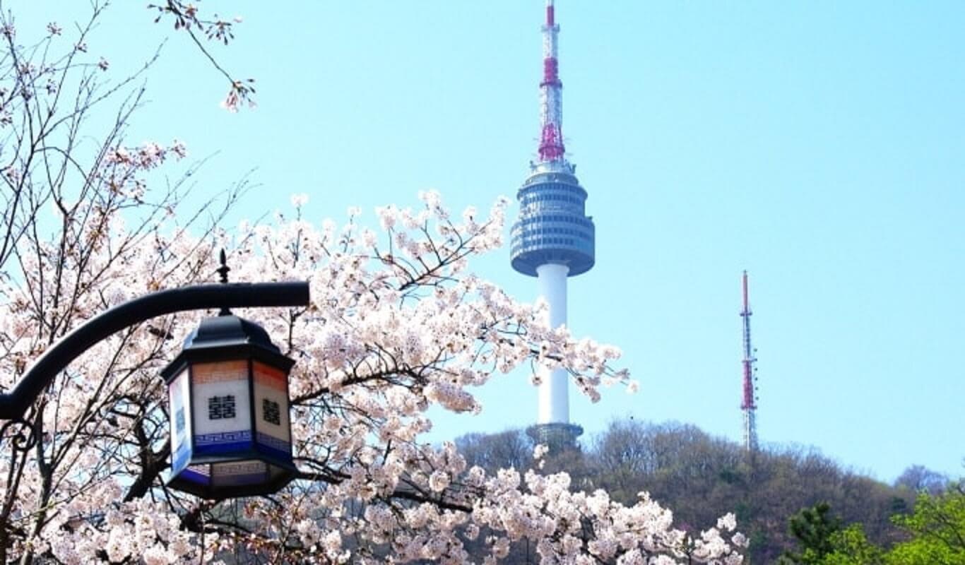 Khám phá Hàn Quốc mùa hoa anh đào