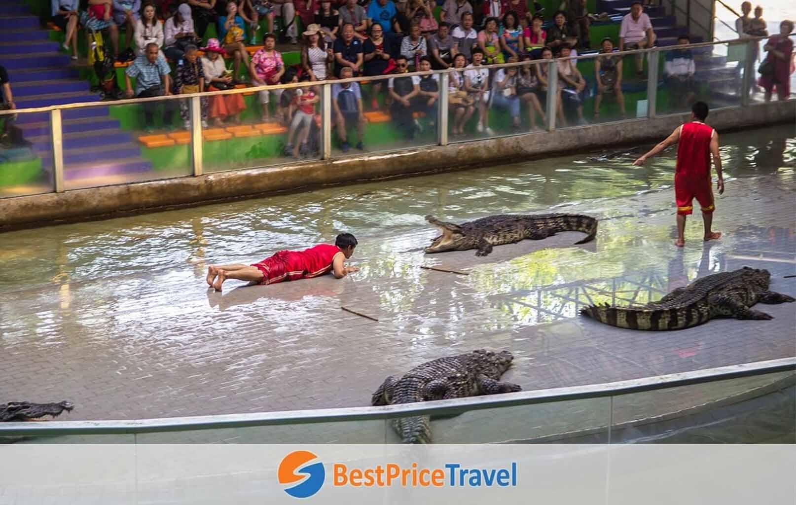 Chương trình biểu diễn đặc biệt - bắt cá sấu bắng tay không