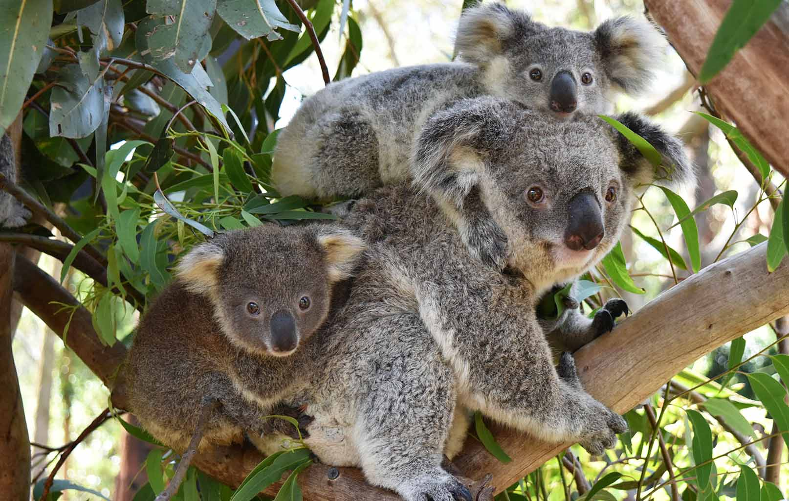 Công Viên Koala Park