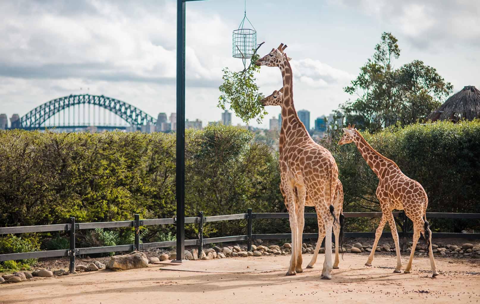 Vườn Thú Taronga Zoo