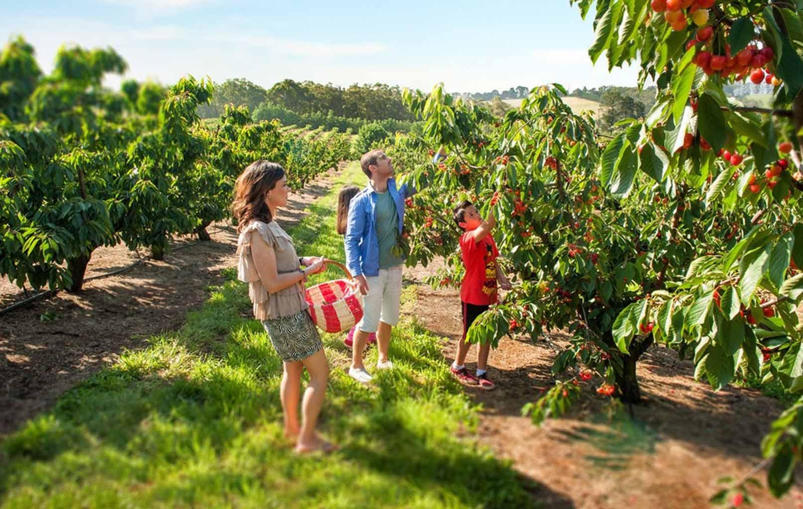 Vườn trái cây Bacchus Marsh